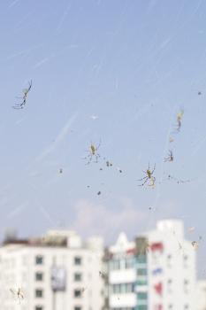 http://flomaak.net/files/gimgs/th-42_untitled_(spiders)_2016_v3.jpg